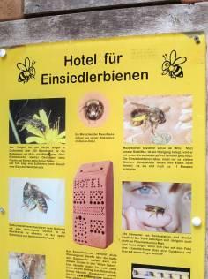 einsiedlerbiene ... wusste gar nicht, dass es auch bienen gibt, die alleine leben. sehr sympatisch